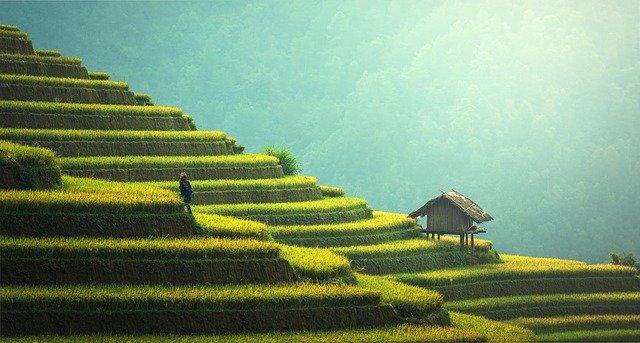 ryż basmati wartości odżywcze
